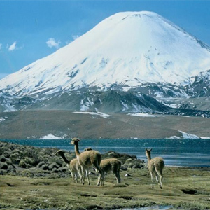 Nationalpark Lauca