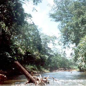 Biosphärenreservat Río Plátano