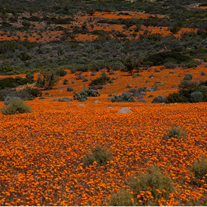 Namaqua-Nationalpark